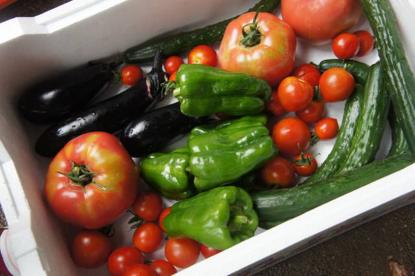 無農薬・減農薬野菜